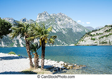 Lago di Garda Beach - Palm trees at the beach of Lake Garda...