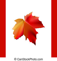 autumn maple leaf in form of flag Canada