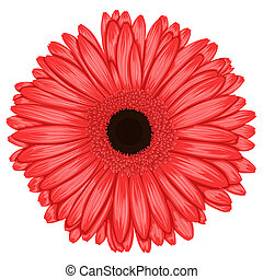 Beautiful pink gerbera isolated on white background ....