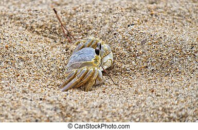 Sand Crab - Shot of a sand crab on the beach