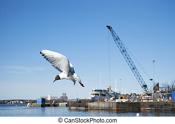 Flying seagull in a harbor