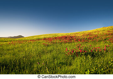 Flowery field - Beautiful flowery field on the spring season