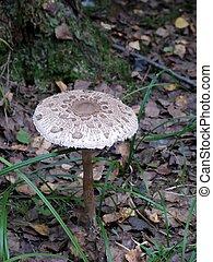 Toadstool Mushroom - Toadstool A wood mushroom Summer Old...