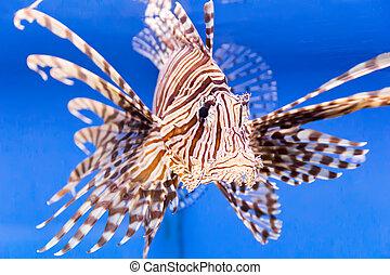 Aquarium fish - Photo of aquarium fish in blue water