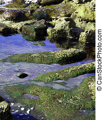 Coastal tidepools and mossy rocks - Reflections in a coastal...