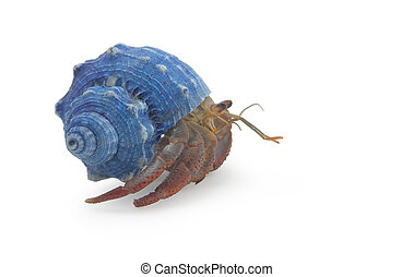 Hermit Crab Isolated on White - A hermit crab isolated on...