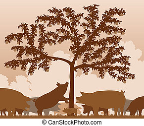 Foraging pigs