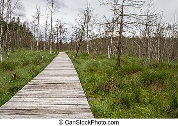 trail through the swamp