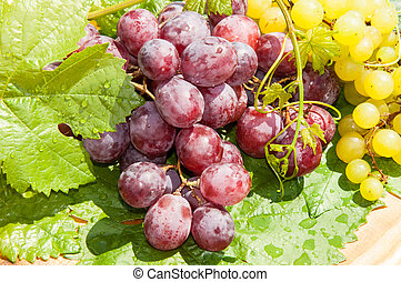 Bunch of grapes - Grapes are a genus of plants in the family...