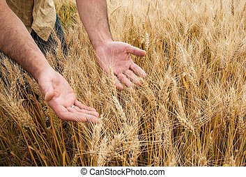 Farmer with his harvest