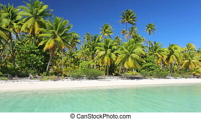 tropical island in the south pacific with palm trees