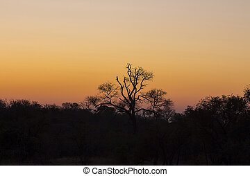 Tree silhouetted against a colorful sky 1