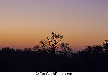 Tree silhouetted against a colorful sky 2