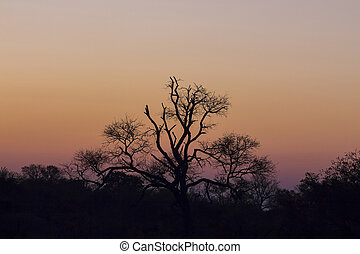 Tree silhouetted against a colorful sky 3