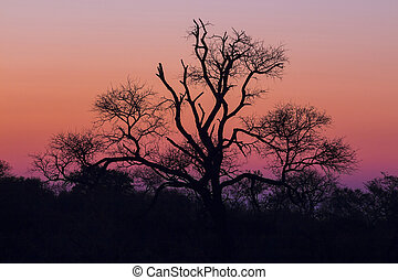 Tree silhouetted against a colorful sky 4