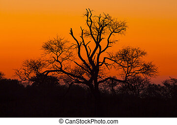 Tree silhouetted against a colorful sky 5