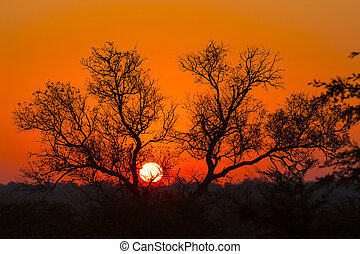 Tree silhouetted against a colorful sky 6