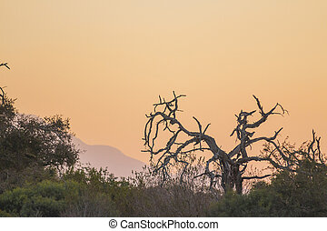 Sunset with a dead tree in the foreground