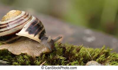 The head of the snail and the shell