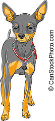 vector sketch dog Chihuahua breed - color sketch of the cute...