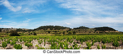 Panoramic grapevines landscape - Panoramic grapevines...