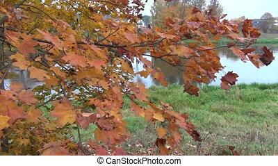 leaves river landscape