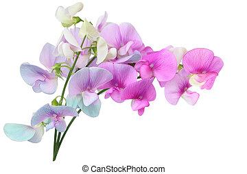 selvagem, doce, ervilha, flores