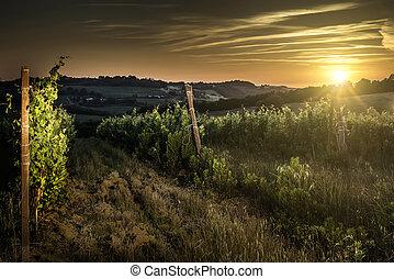 Vienyards at sunset. Night lights
