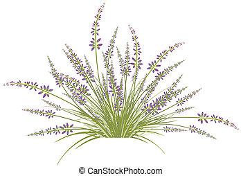 lavande, fleur, buisson