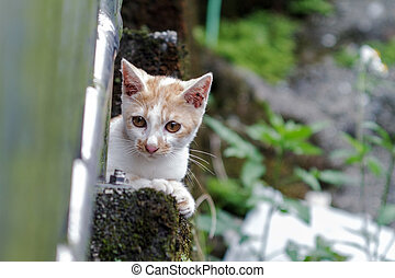 Cat with nice background
