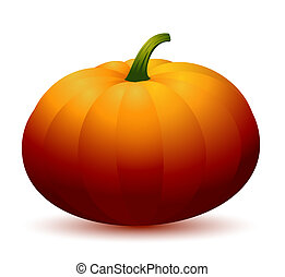 Realistic Pumpkin - isolated on white