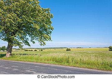 beautiful idyllic landscape - idyllic land, tree near lonely...