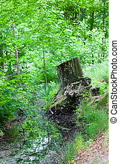 Wald - Natur