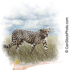 Watercolor Image Of Cheetah - Watercolor Digital Painting Of...