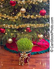 Christmas wheat under xmas tree