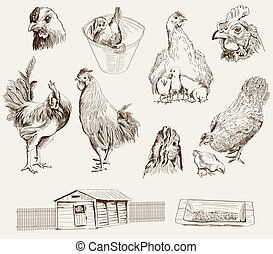 chicken breeding. collection of vector designs on a gray...