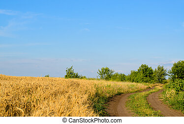 Farm track through a golden wheat field leading to green...