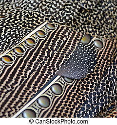 Great argus feathers - Colorful pattern bird feathers of...