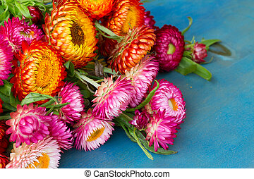 Bouquet of Everlasting flowers bouquet  on blue table