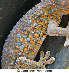 gecko - Beautiful gecko lizard, body and pattern profile