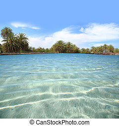 Crystal waters shore with palm tree forest
