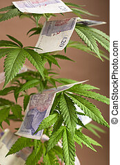 Cannabis business concept Cannabis plant with banknotes in...