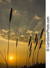 wild grass at sunrise background