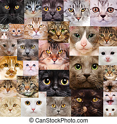 Cats faces - Set of cats heads, different cat breeds