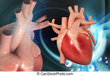 human heart - digital illustration of a human heart in...
