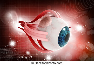 Human eye - digital illustration of a Human eye on digital...
