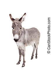 Donkey on white - Pretty Donkey isolated on the white...