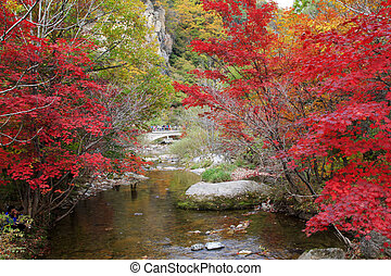 Streams and maple leaves in a scenic spot - Streams and...