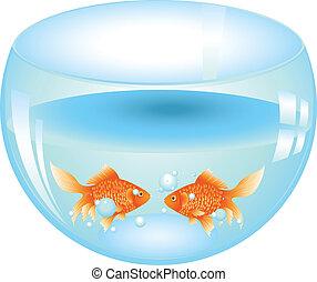 Gold Fish in Aquarium - Cartoon gold fish swimming in the...