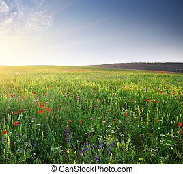 Spring meadow Composition of nature